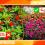 Pirataria de flores: mais uma modalidade de comércio ilegal no país