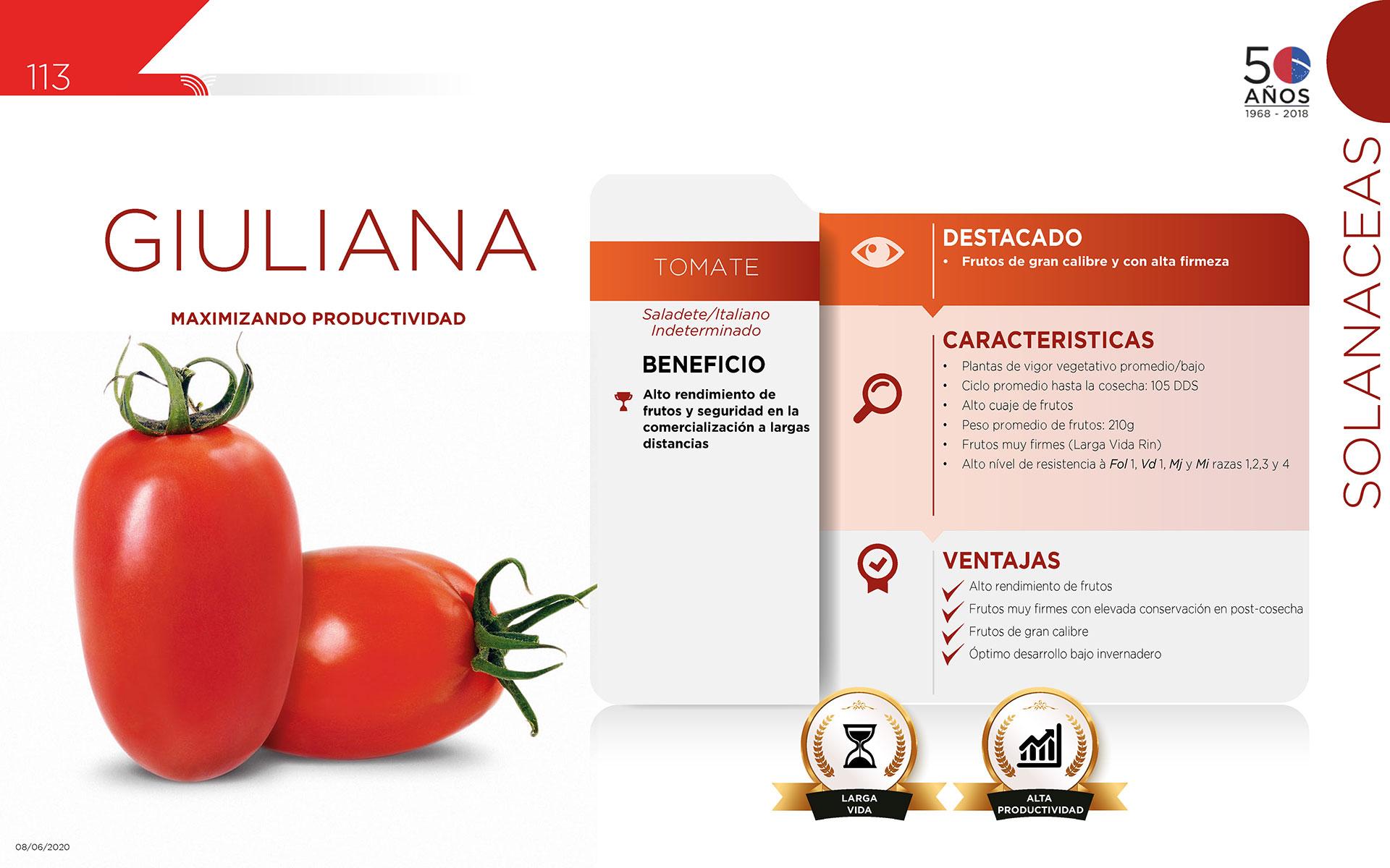 Giuliana - Solanaceas