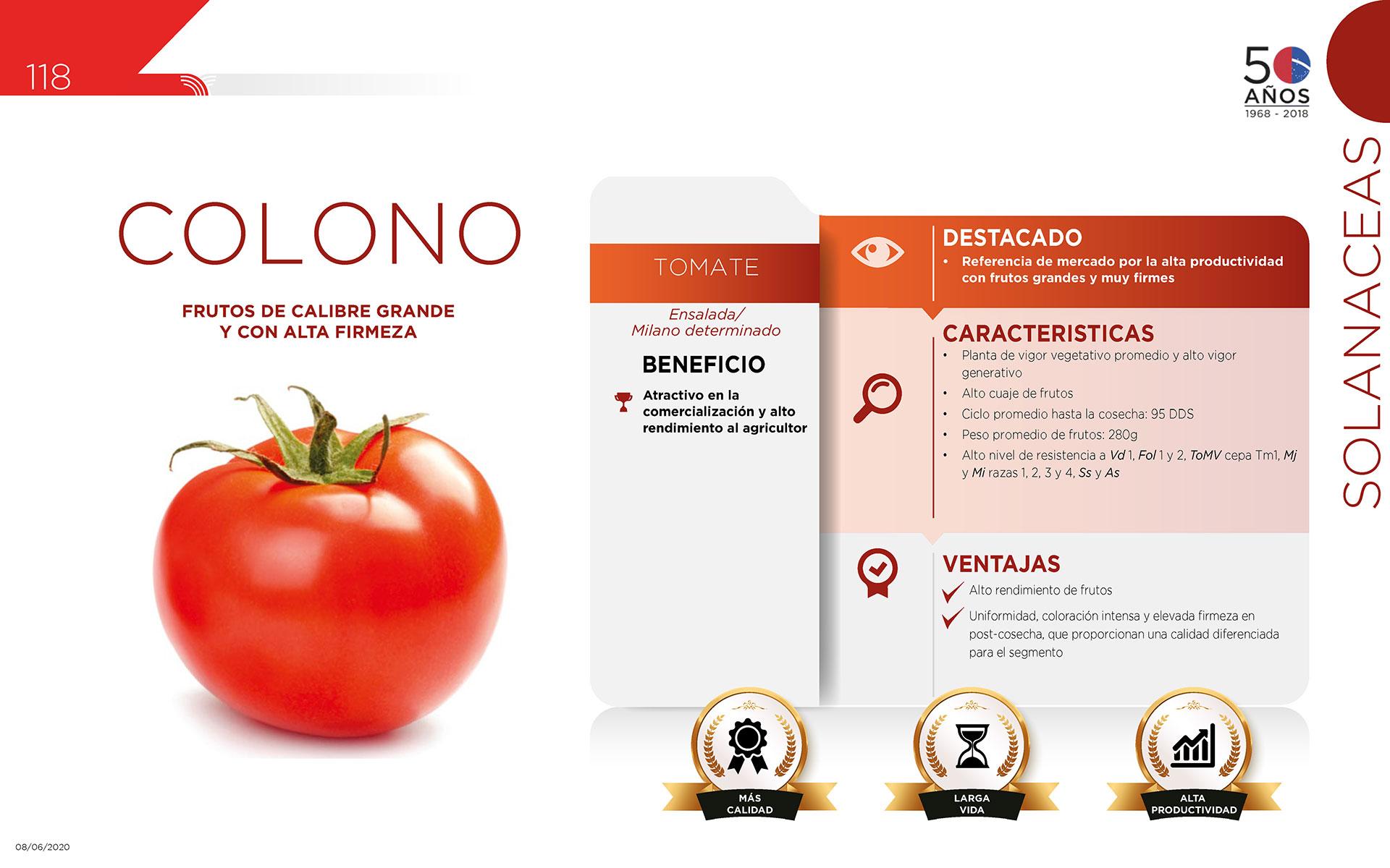 Colono - Solanaceas