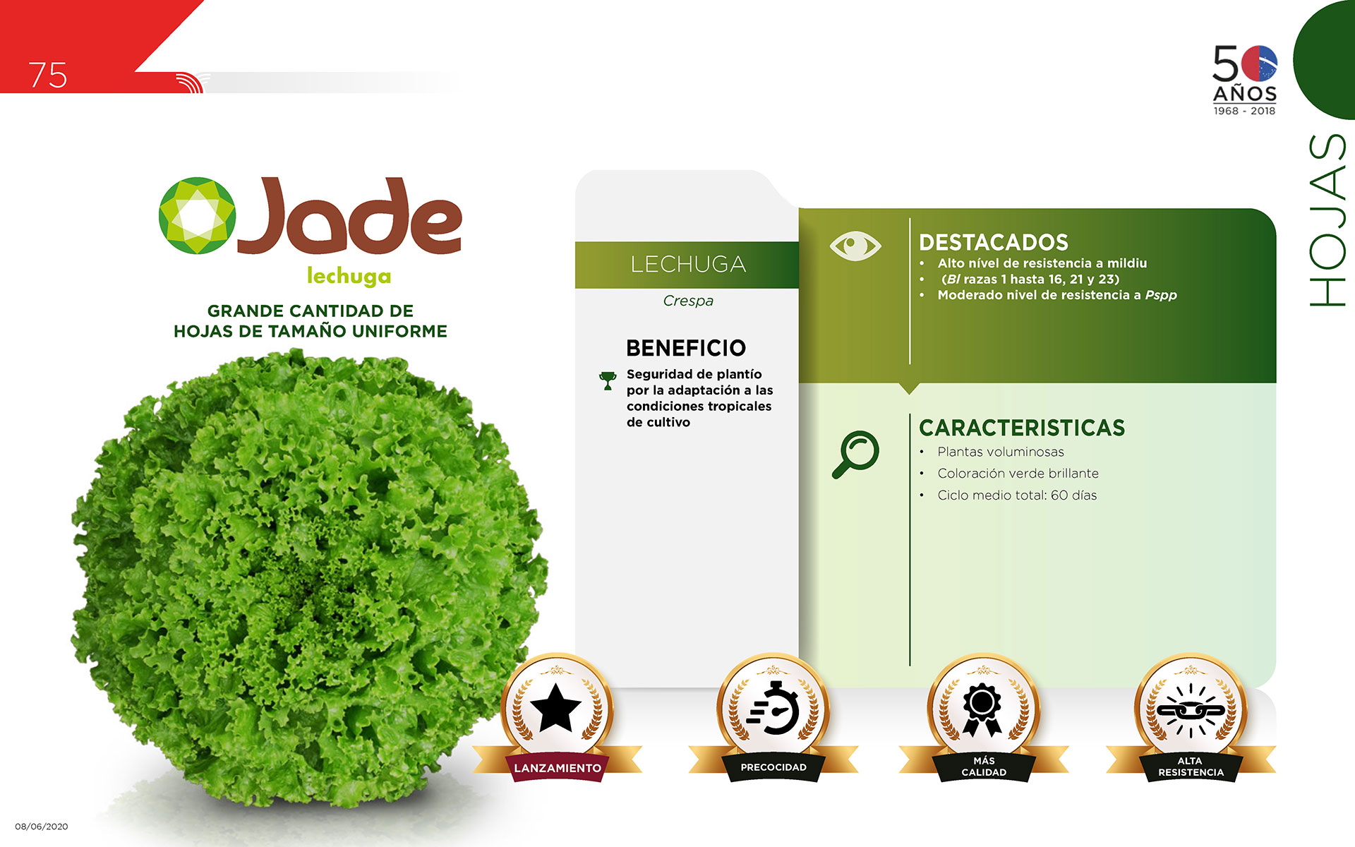 Jade - Hojas