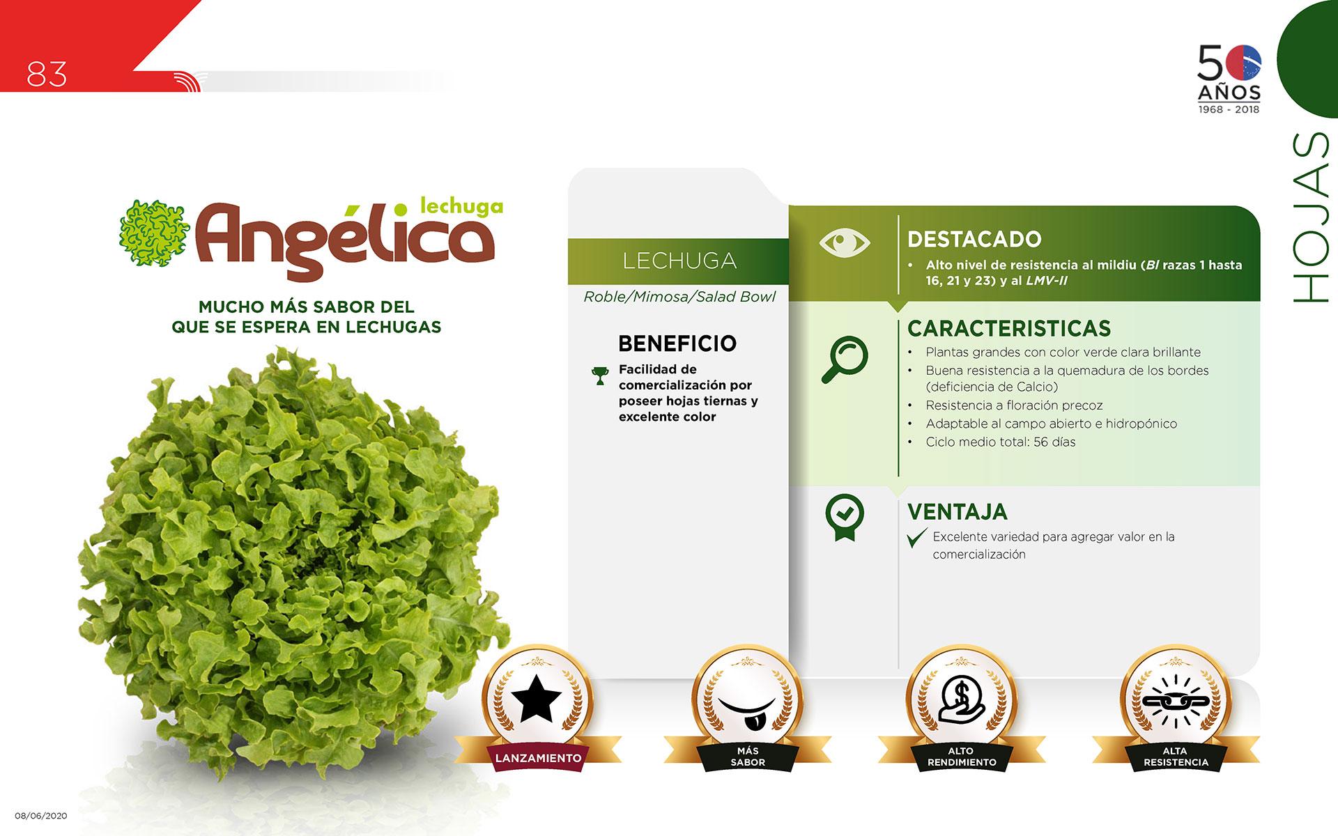 Angélica - Hojas