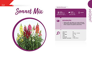 Sonnet Mix - Jardim