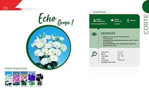 Echo - Grupo 1 - Corte