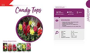 Candy Tops - Jardim