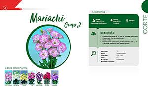 Mariachi - Grupo 2 - Corte