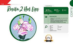 Rosita 2 Hot Lips - Corte
