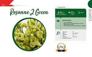Rosanne 2 Green - Corte