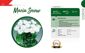 Maria Snow - Corte