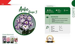 Aube - Grupo 3 - Corte