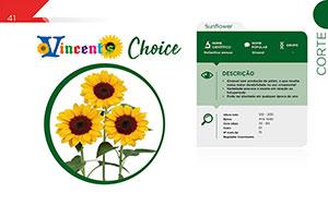 Vincent's Choice - Corte