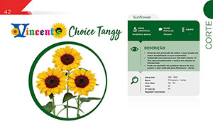 Vicent's Choice Tangy - Vaso