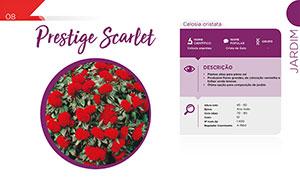 Prestige Scarlet - Jardim